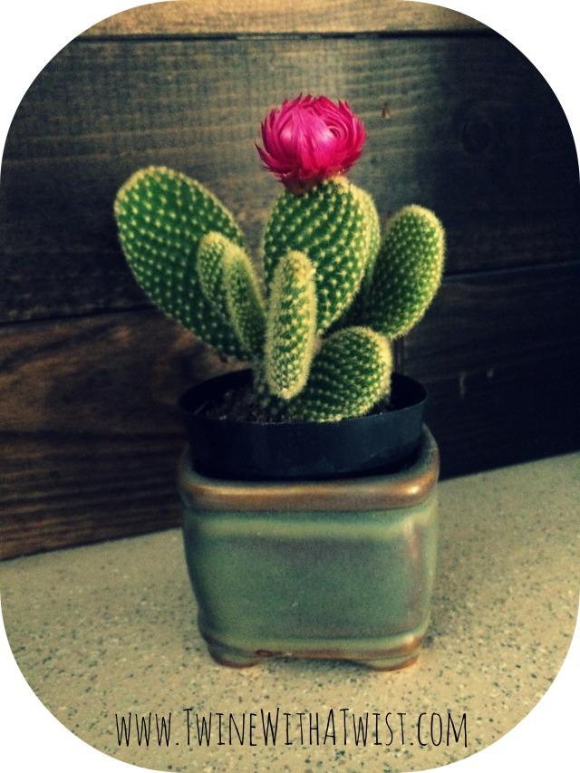 cactus .jpg
